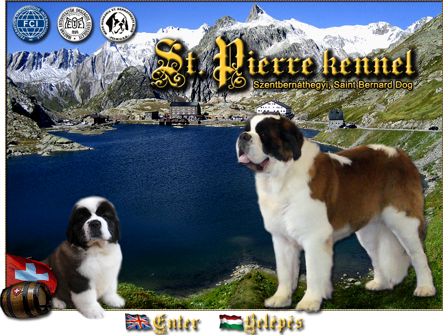 kutya, bern�thegyi,Saint Bernard Breeders, Saint Bernard Puppies, Saint Bernard puppy for sale, puppy, Saint Bernard Puppy, St. Pierre kennel, Bern�thegyi, St. Pierre bern�thegyi,bern�thegyikutya, kutyus Saint Bernard Breeders, Saint Bernard Rescues, Saint Bernard Puppies, Saint Bernard puppy, puppy, Saint Bernard Puppy,  St. Pierre kennel, Bern�thegyi, St. Pierre bern�thegyi, �llat;bern�thegyikutya, kutyus, st bernard dog, St. Bernard, Saint Bernard Dog and Puppies,
