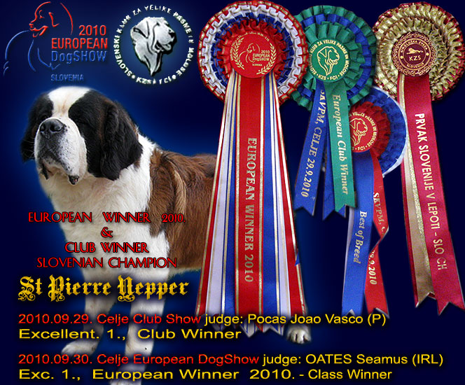 european winner st bernard 2010