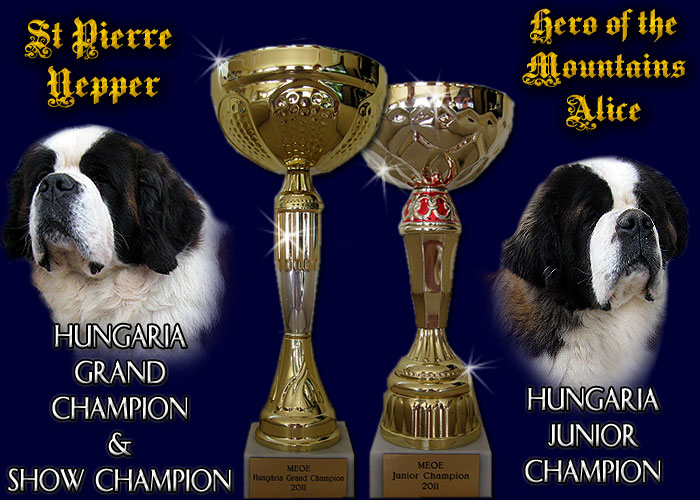 hungaria grand champion, hungaria show champion, hungaria junior champion