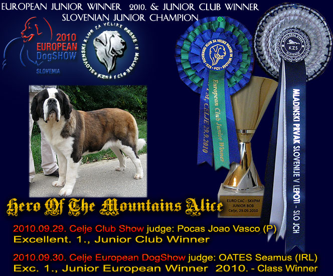 junior european winner bitch st bernard 2010